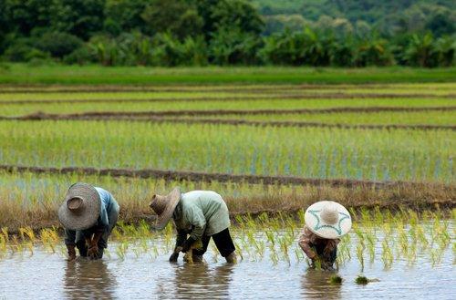 Scuba Rice