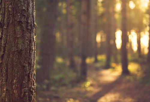 Reforestation Carbon Sequestration