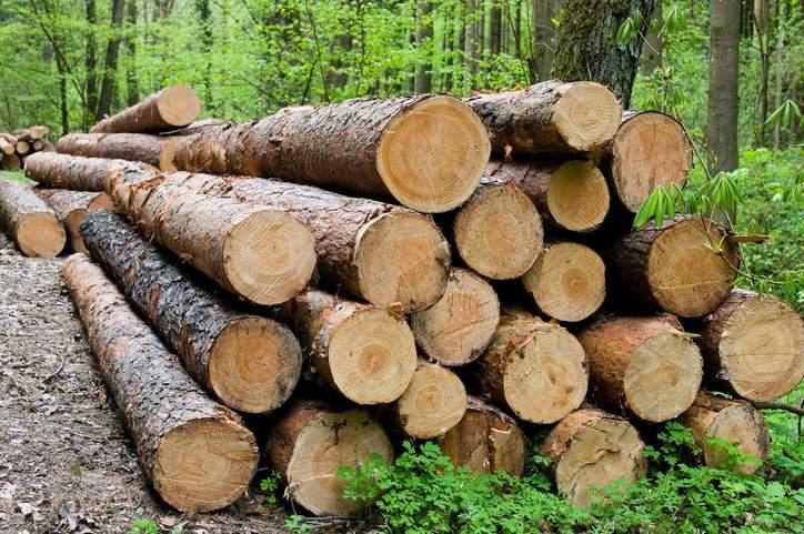 Wood Sourcing Forensic Fiber Analysis