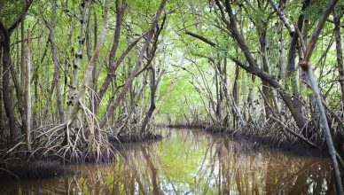 A flooded mangrove, for which forensic fiber analysis can track wood from.