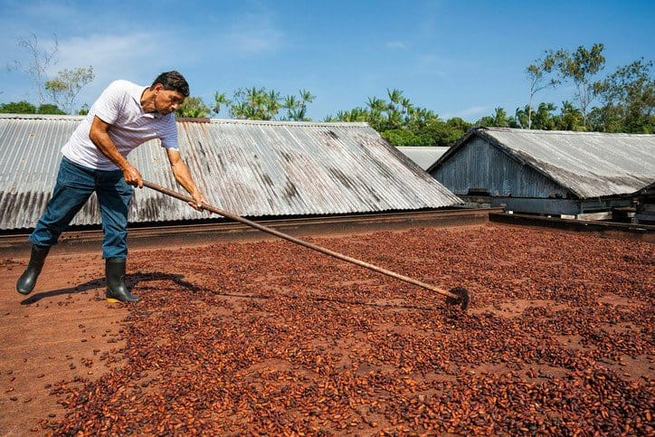 A farmer harvesting cocoa beans by following ISO 34101