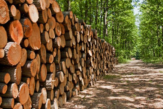 Forest Clearing Standards ASTM