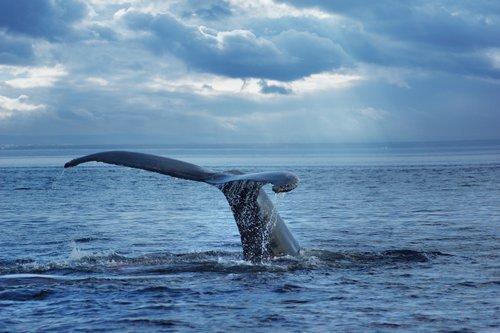 Whale Sound Exposure