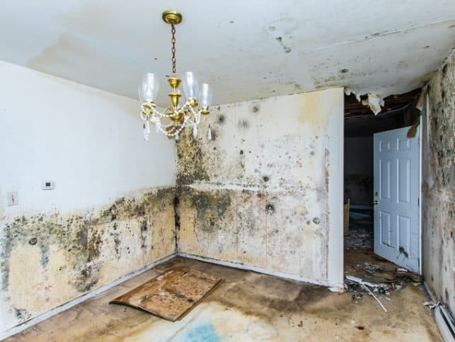 Mold all over home with rotten chandelier needs ANSI/IICRC 520 for analysis.