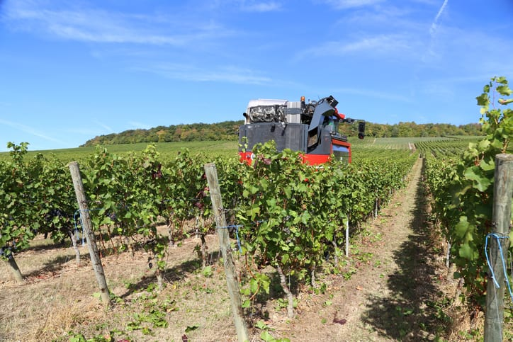 An ISO 5704 grape harvester in action, cutting down grape plants in vineyard.