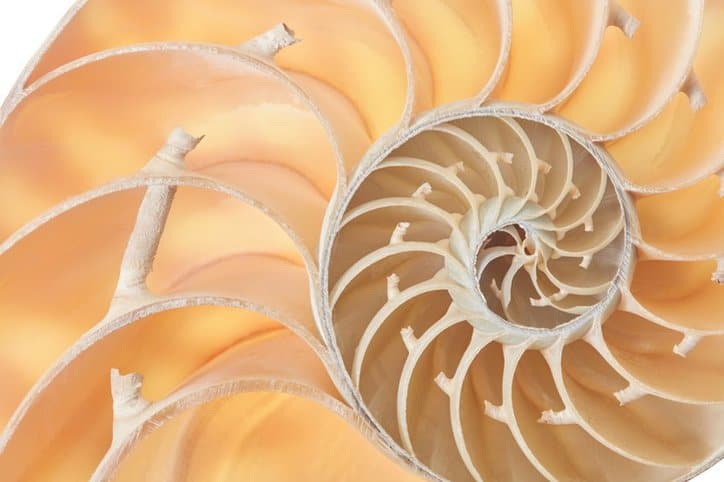 Closeup of a nautilus shell depicts the golden ratio standard.